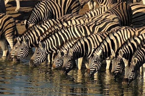 Fotografie Ausstellung Tiere Afrika
