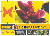 Orchideen - Farbtupfer im Regenwald
