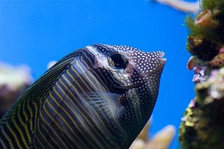 Führung Unterwasserwelt
