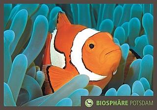 Clownfisch in der Biosphäre Potsdam