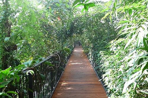 Blick in den Dschungel, Regenwald aktiv erleben, Regenwald in der Biosphäre Potsdam, Ausstellung in Potsdam