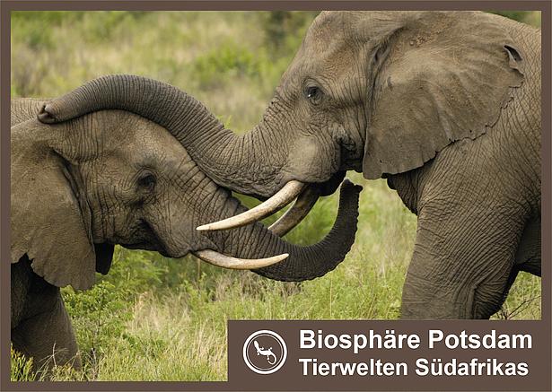 Tierwelten Südafrikas in der Biosphäre Potsdam