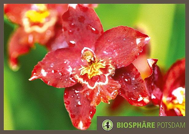 Die besondere Orchideenausstellung in der Bioshäre Potsdam