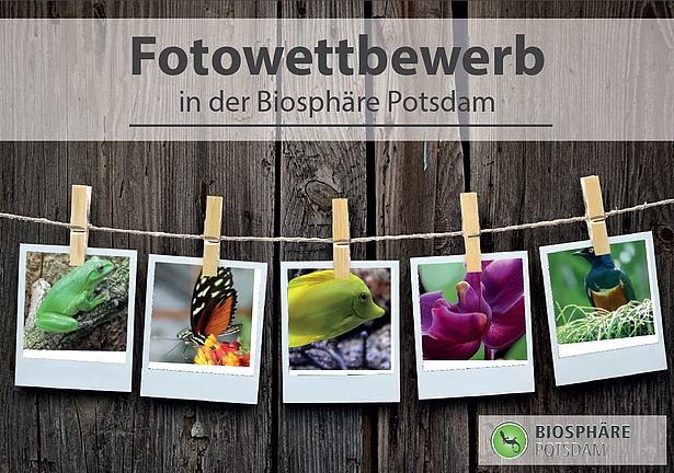 Fotowettbewerb in der Biosphäre Potsdam