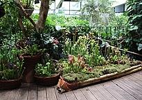 Karnivorenausstellung in Potsdam, Fleischfressende Pflanzen in Potsdam, Karnivorenausstellung in der Biosphäre Potsdam