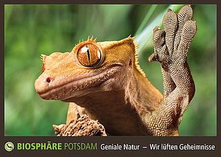 Bionik Führung in der Biosphäre Potsdam