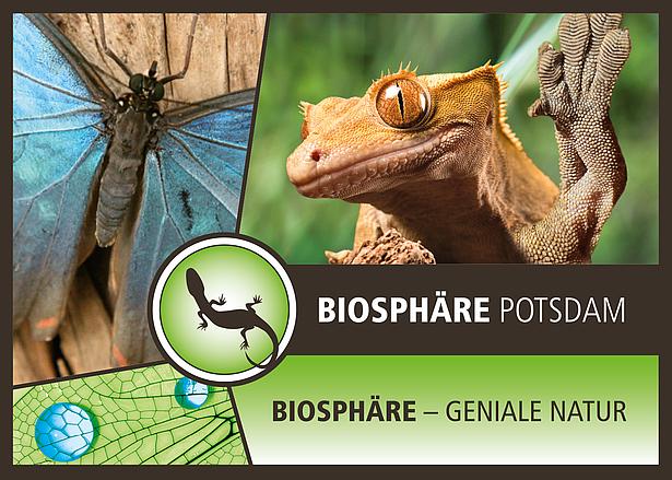 Geniale Natur in der Biosphäre Potsdam