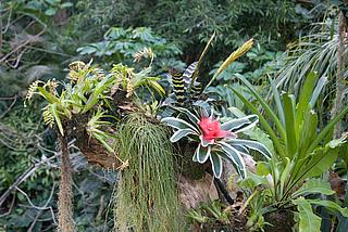 Führung, Tropen, Regenwald