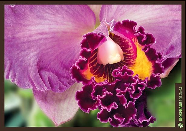 Orchideensonderschau in der Biosphäre Potsdam
