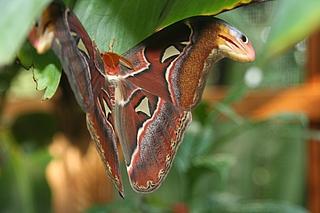 Führung zu Schmetterlingen in der Biosphäre Potsdam
