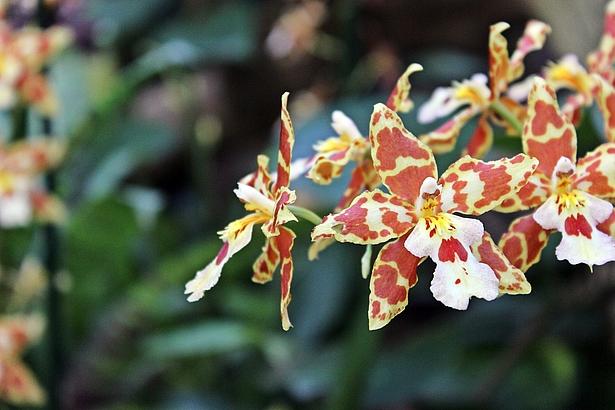 Geführter Rundgang Biosphäre Potsdam Orchideenblüte 2019