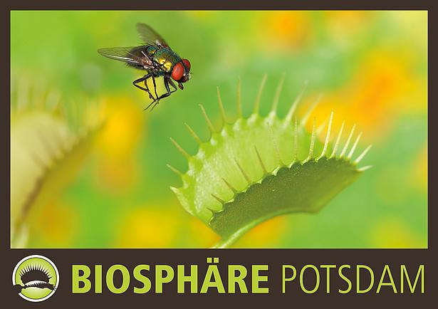 Fleischfressende Pflanzen Ausstellung in der Biosphäre Potsdam