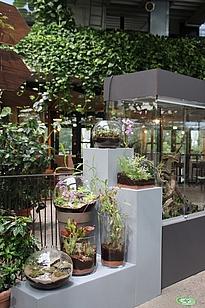 Karnivorenausstellung von Fleischfressenden Pflanzen in der Biosphäre Potsdam