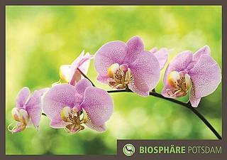 Orchideenblüte, Potsdam, Orchideen