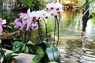 Geführter Rundgang durch die Orchideenblüte 2019 Biosphäre Potsdam