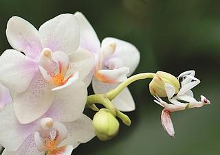 Orchideen Ausstellung 2019 in der Biosphäre Potsdam