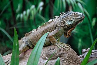 Tiere und Pflanzen im Regenwald der Biosphäre Potsdam