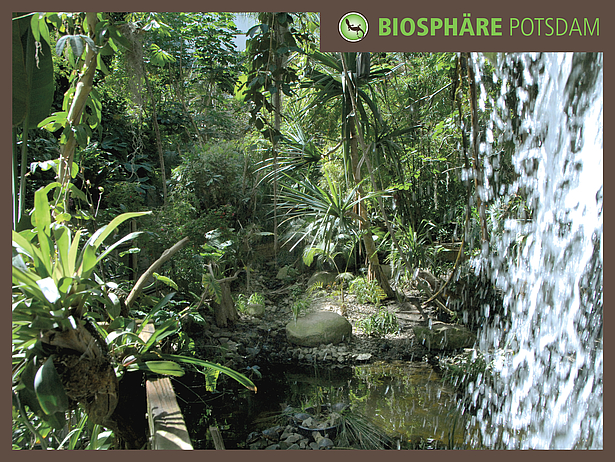 Waterfall in the Biosphere Potsdam