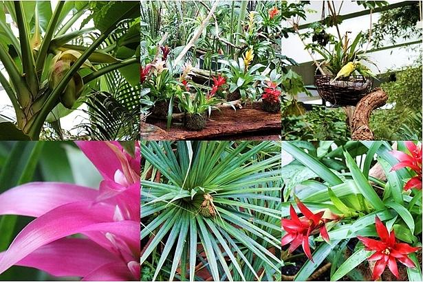Blühten und Blumen in der Biosphäre Potsdam
