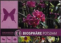 Orchideen - Frühling im Dschungel