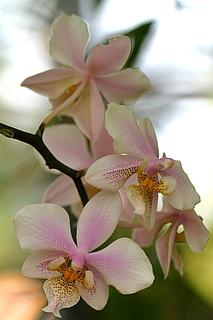 Orchideenbrunch in der Biosphäre Potsdam