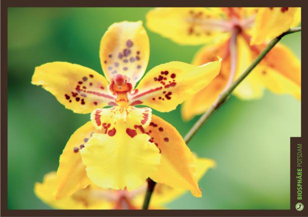 Orchideenausstellung 2018 in der Biopshäre Potsdam