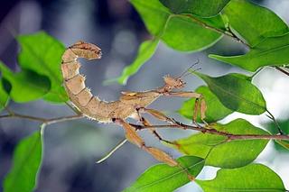 Tropische Tier- und Pflanzenwelt