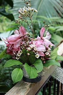 Orchideenblüte 2019 in der Biosphäre POtsdam