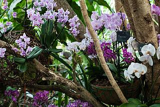 Orchideenblüte Rundgang in der Biosphäre Potsdam
