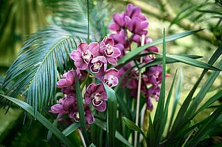 Orchideenblüte, Führung, Potsdam
