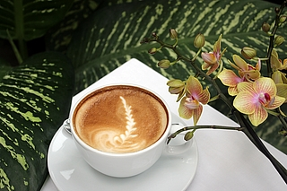 Kaffee zur Orchideenblüte in der Biosphäre Potsdam