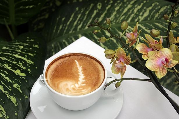 Café in der Biosphäre Potsdam zur Orchideenblüte 2018