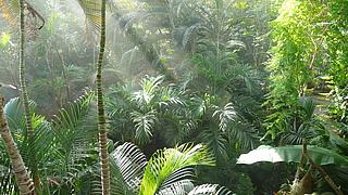 Führung tropische Pflanzen Biosphäre