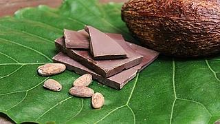 Schokolade herstellen in der Biosphäre Potsdam