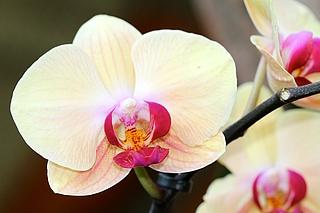 Orchideencafé, Orchideenblüte, Potsdam