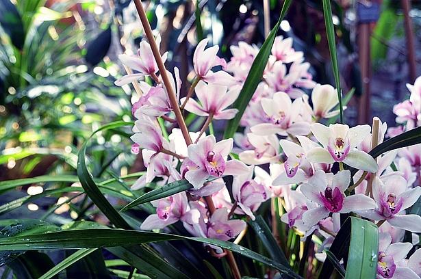 Ausstellung Orchideenblüte Biosphäre Potsdam