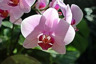 Orchidee, Fotografie, Potsdam