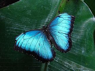 Schmetterlingsführung
