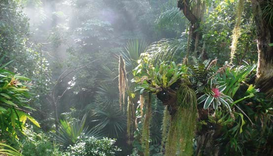 Rain Forest in the Biosphere Potsdam