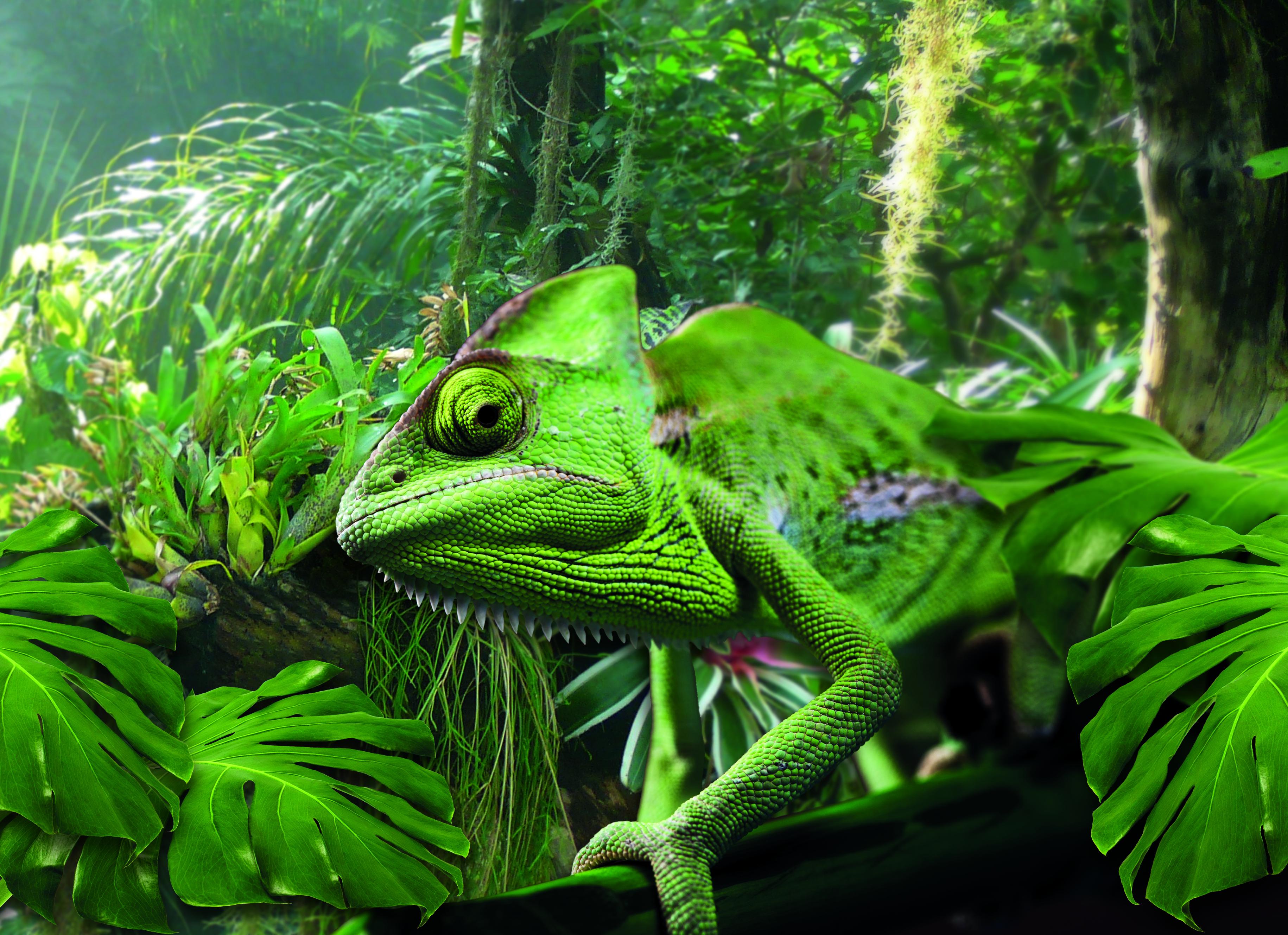 In der Biosphäre Potsdam gibt es einige Tiere und Pflanzen zu entdecken – so man sie nicht übersieht. Foto: Biosphäre Potsdam