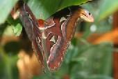 Führung Schmetterlinge